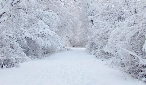 Tuyết Thư