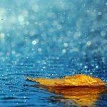 Nỗi buồn mưa giấu đi