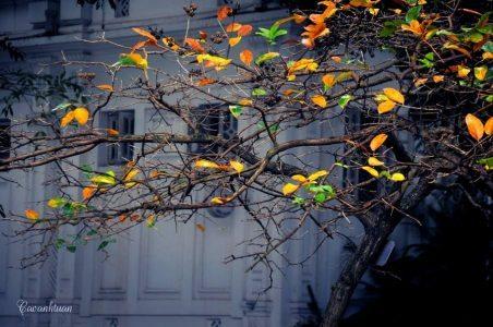 Đầu mùa gió bấc
