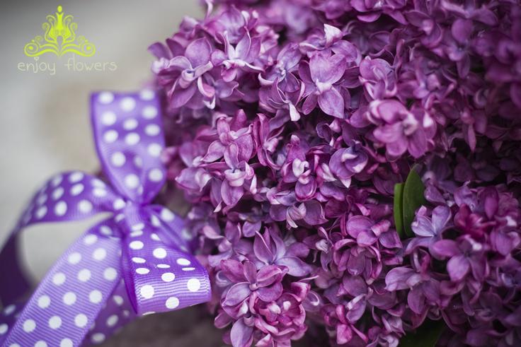 Sứa và tiệm hoa