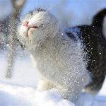 Mùa đông ấm áp