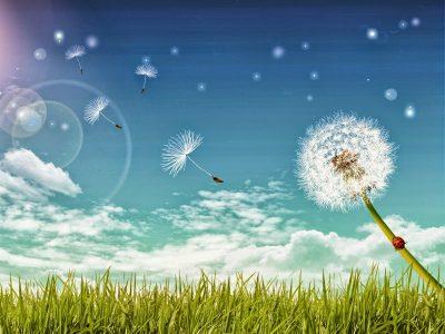 Phải chăng Tình Yêu mong manh như Bồ Công Anh trước Gió? ( Giá Như Đó Chỉ Là Giấc Mơ P1 )