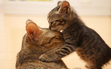 [Ca Khúc] Gặp mẹ trong mơ