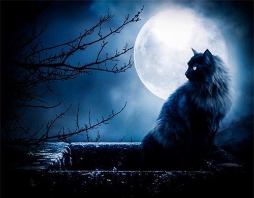 """Ma Mèo – Quỷ Thi, một truyện ma đầy """"nhân tính"""""""