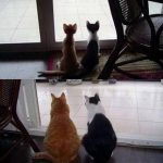 Mèo đen và hạt cơm giữa trán