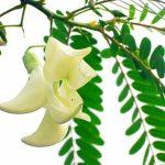 Hạnh phúc cây so đũa