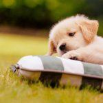 Tự truyện của một con chó
