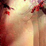 Thoang thoảng hương rừng