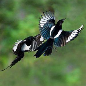 Camera và câu chuyện của hai chú chim