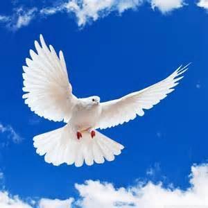 Ước gì tôi là chú chim