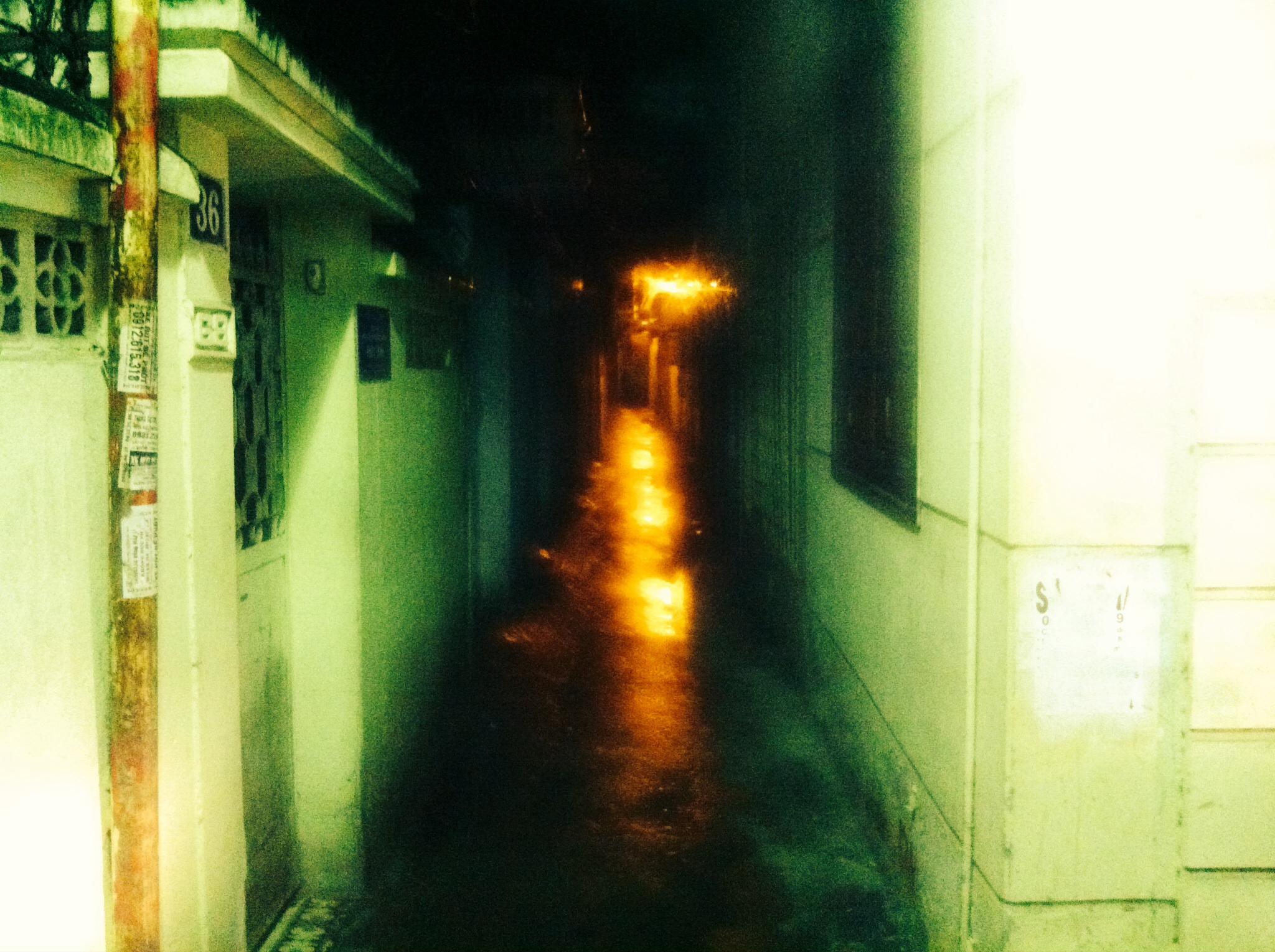 Cây Lặng Đêm Mưa