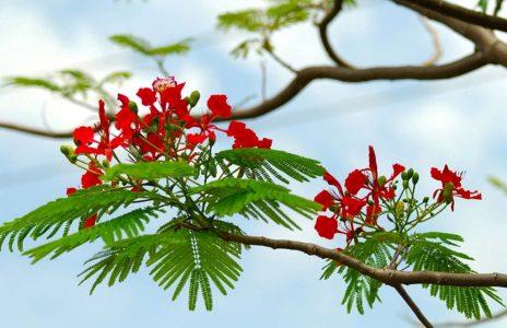 Tiếng chuông mùa hạ đỏ