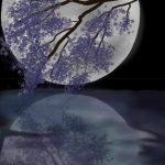 Chương 2. Ngôi sao gần mặt trăng nhất.