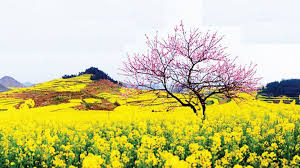 Hương vị mùa xuân
