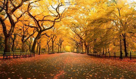 Mùa thu! Mùa của sự bình yên