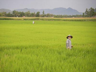 Hồn Quê Vương Ngõ Chiều Hà Nội