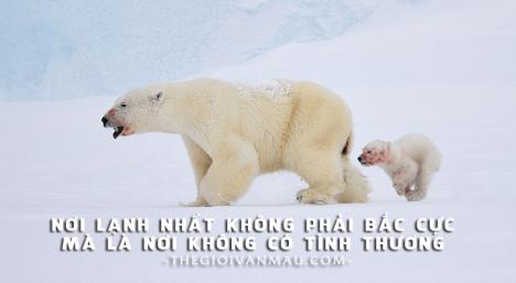Nơi lạnh lẽo nhất không phải là Bắc Cực mà là nơi không có tình thương