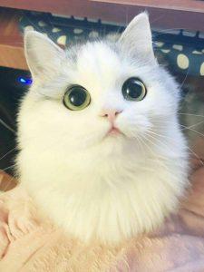 Chú Người Mèo Bất Đắc Dĩ