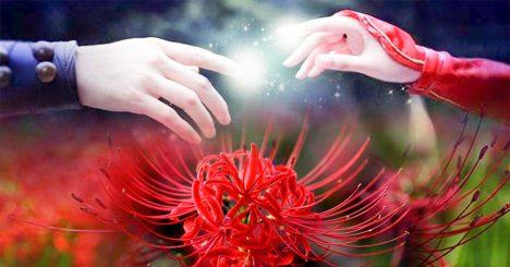 Bỉ ngạn hoa: Chuyện tình hoa và lá.