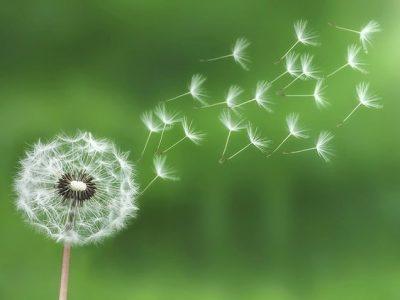 Giấc mơ màu hoa gió