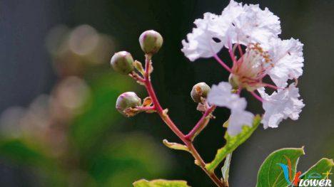 Loài hoa đẹp thầm lặng