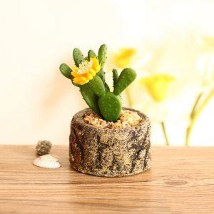Hoa Hướng Dương và cây Xương Rồng