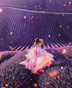 Sự chờ đợi của hoa oải hương