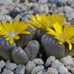 Hoa Nở Trên Đá