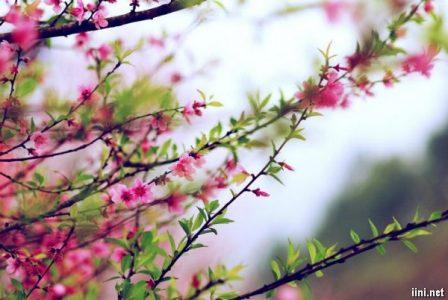 [Xuân Canh Tý – Đào Thắm Mai Vàng] Xuân đã về