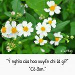 Linh Rina