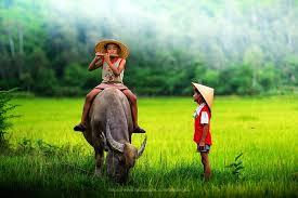 Thuyết minh về con trâu trong đời sống Việt Nam