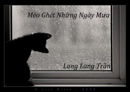 Mèo Ghét Những Ngày Mưa