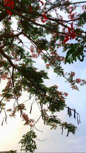 Hoa Nở Mùa Hè