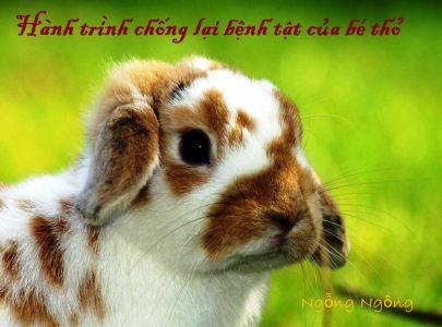 Hành trình chống chọi bệnh tật của bé thỏ