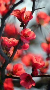 [Xuân Tân Sửu – Muôn Nẻo Đường Tết] Mùa Xuân Của Kẻ Tha Phương